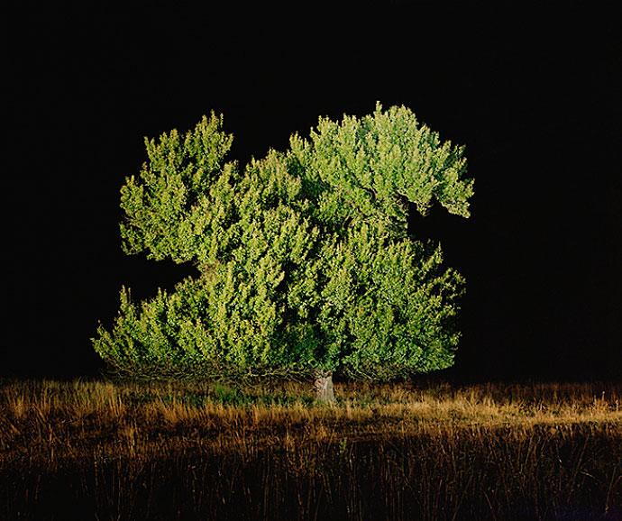 Expoziție de fotografie, Arbori Bătrâni - Florin Ghenade. Vineri, 6 noiembrie, în spațiul Kube Musette, Bd. Calea Victoriei, nr. 114.
